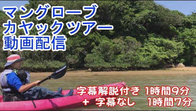 2部構成 オンラインカヤック 家族で楽しむ沖縄マングローブカヤックツアー