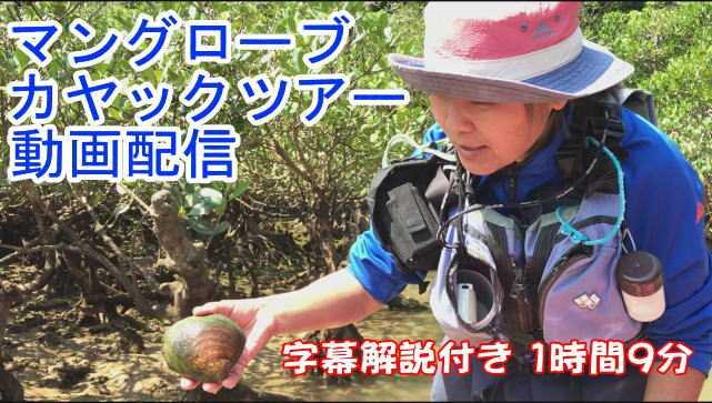 オンラインカヤック 家族で楽しむ沖縄マングローブカヤックツアー